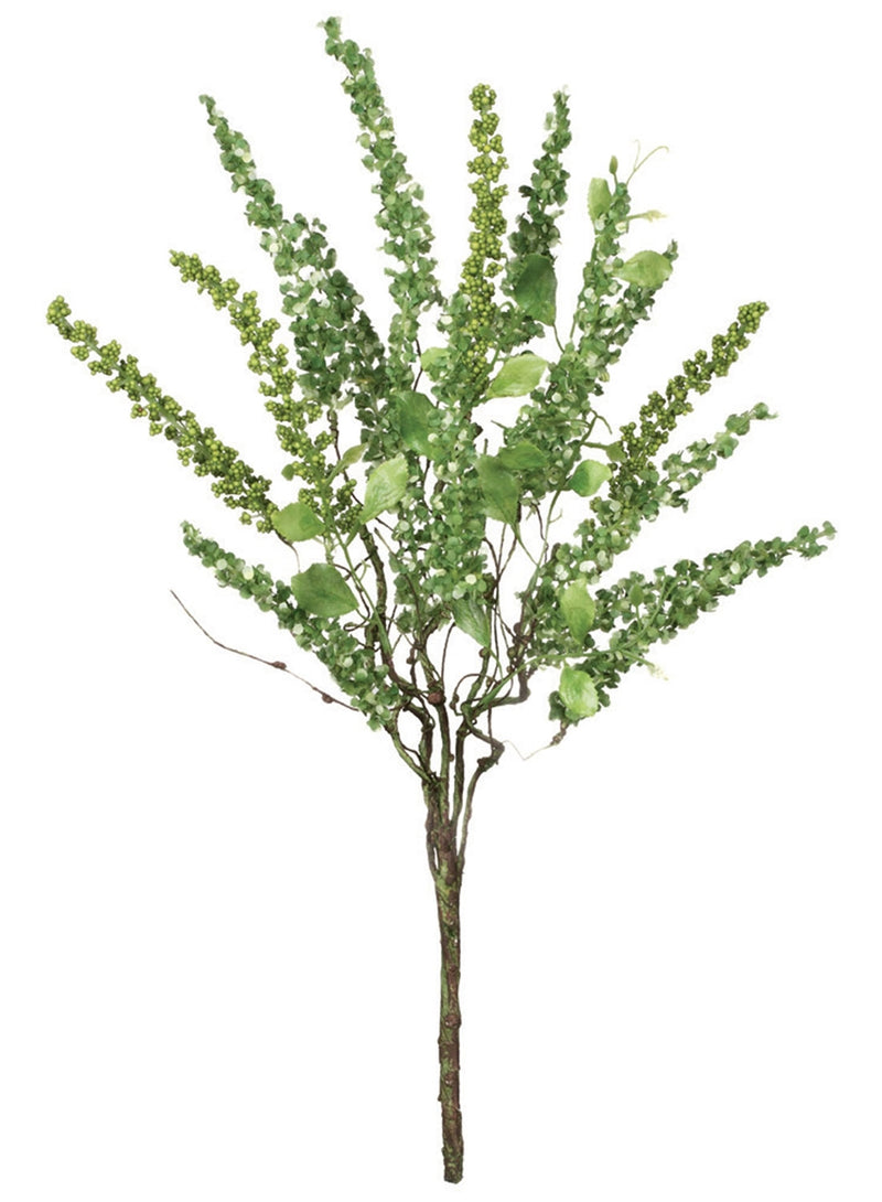 Green Amaranthus Bush