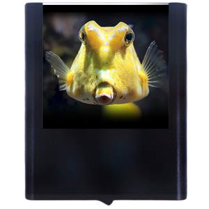 Load image into Gallery viewer, Cow Fish