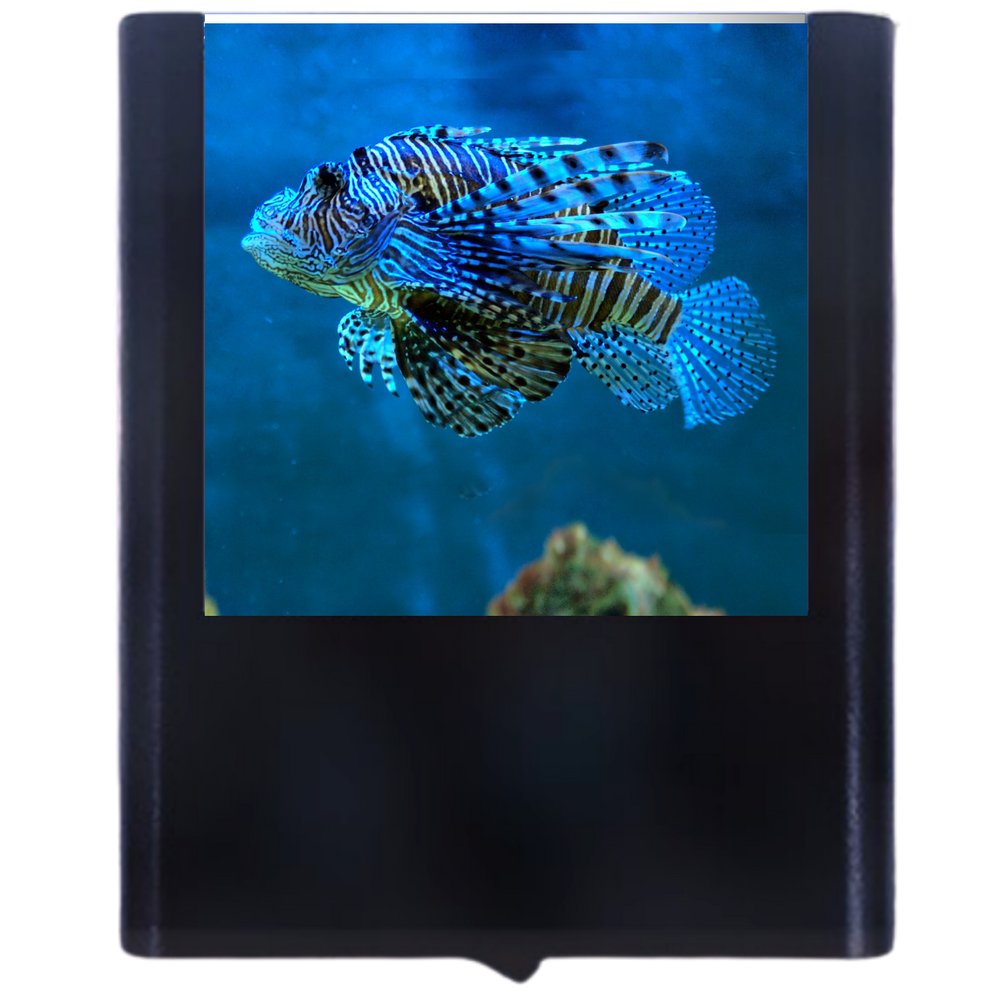 Load image into Gallery viewer, Lion Fish