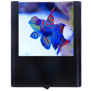Load image into Gallery viewer, Mandarin Fish