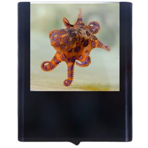 Load image into Gallery viewer, Octopus