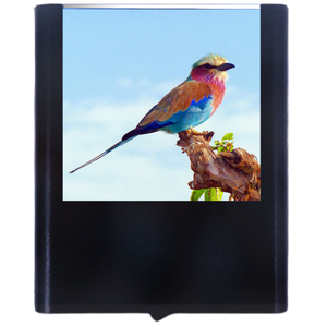 Load image into Gallery viewer, Bird-1