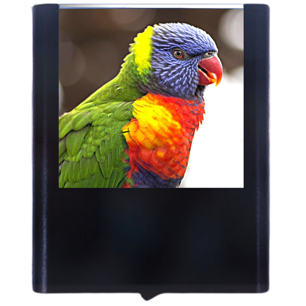 Load image into Gallery viewer, Bird-2