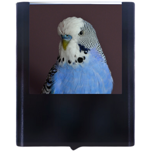 Load image into Gallery viewer, Budgie 1