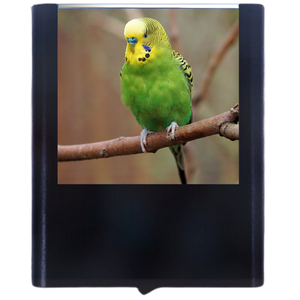 Load image into Gallery viewer, Budgie 2