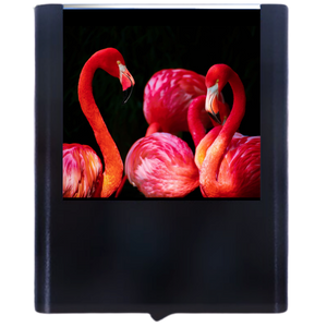 Load image into Gallery viewer, Flamingo-2