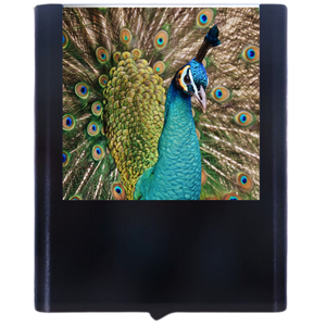 Load image into Gallery viewer, Peacock-1