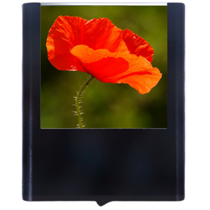 Load image into Gallery viewer, Poppy Flower