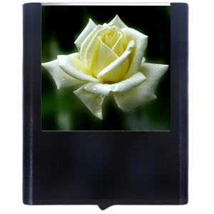 Load image into Gallery viewer, Rose-1