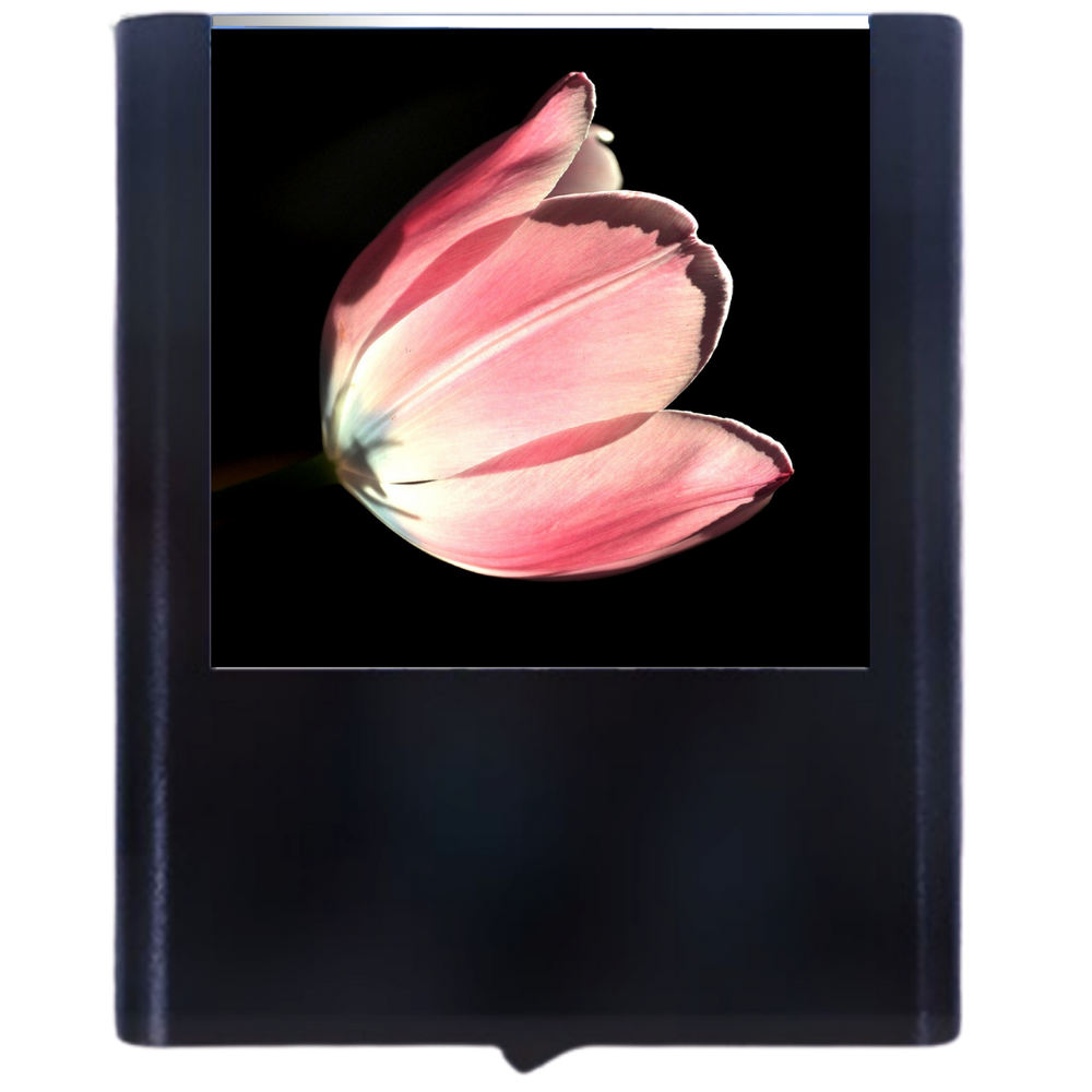 Load image into Gallery viewer, Tulip-1