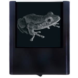 Night Light Tree Frog