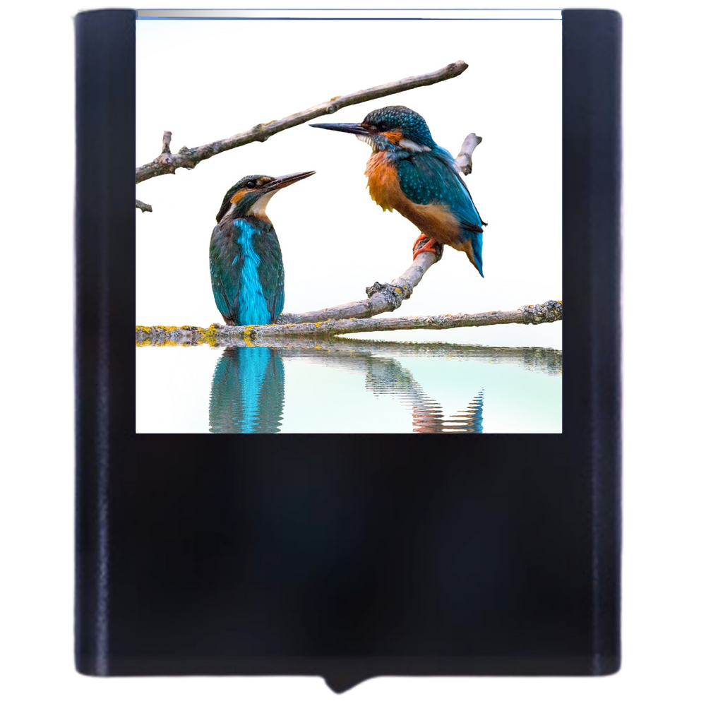 Load image into Gallery viewer, Bird-3
