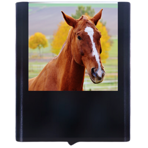 Load image into Gallery viewer, Horse-1