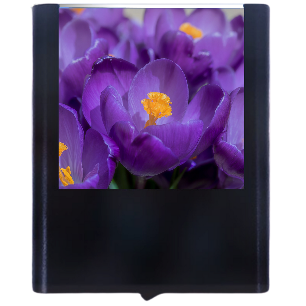 Load image into Gallery viewer, Crocus
