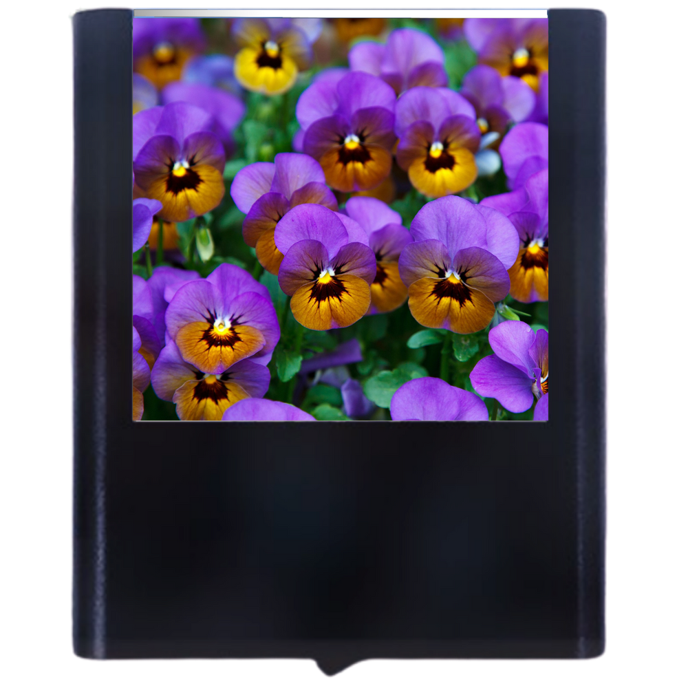 Load image into Gallery viewer, Pansy Flower