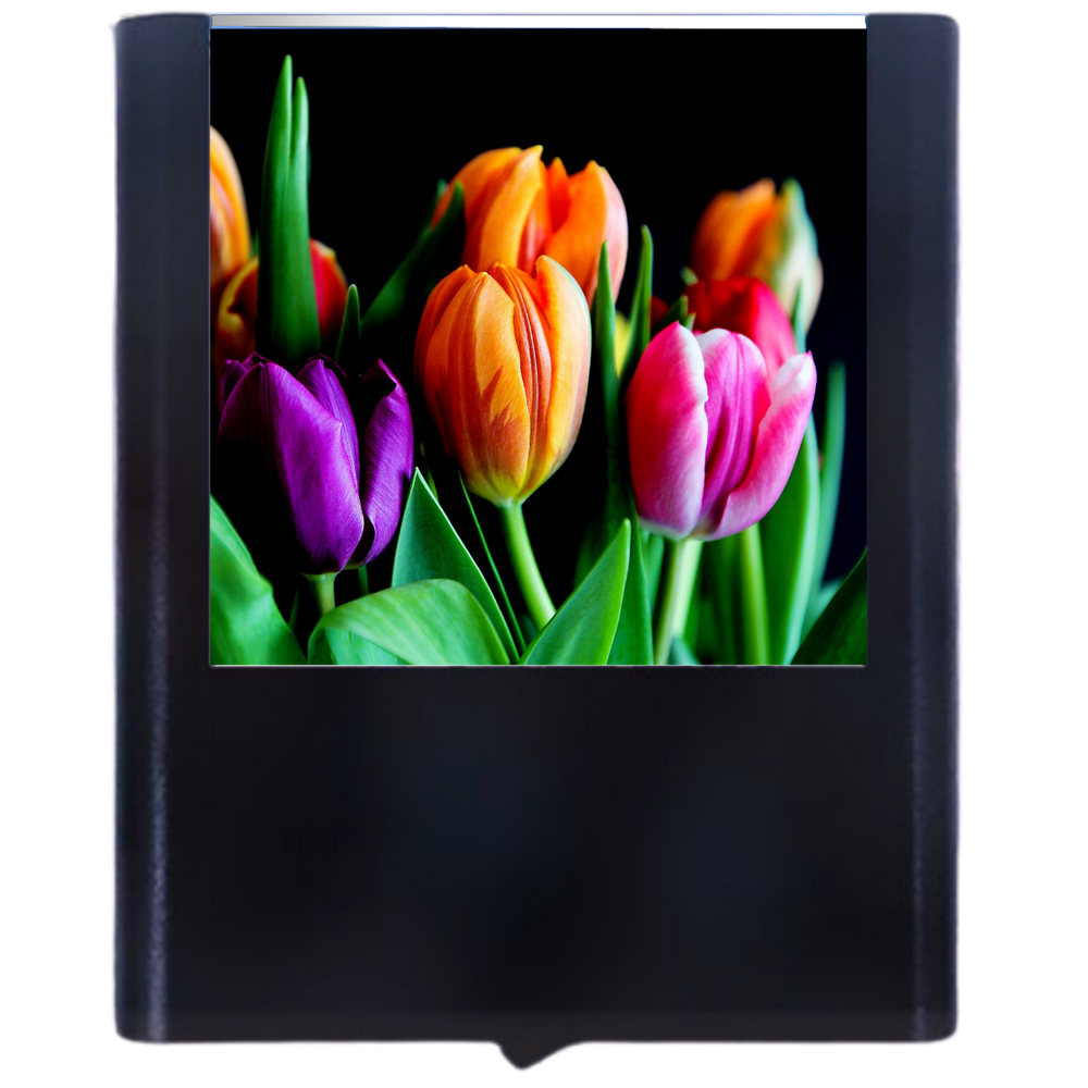 Load image into Gallery viewer, Tulip-2