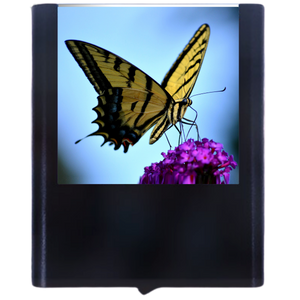 Load image into Gallery viewer, Butterfly-3