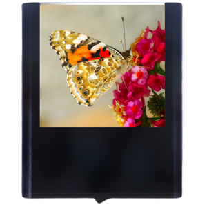 Load image into Gallery viewer, Butterfly-4