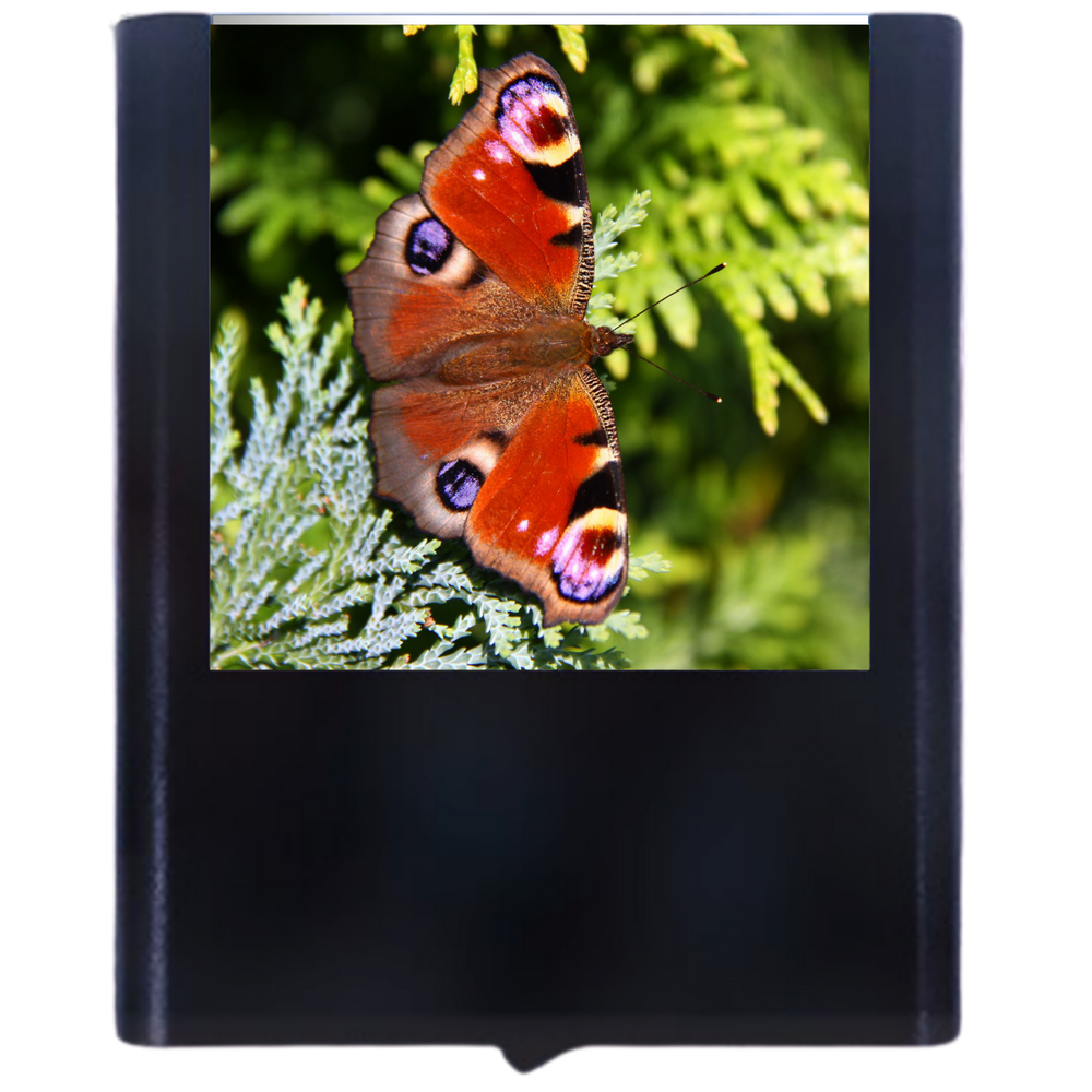 Load image into Gallery viewer, Butterfly-8