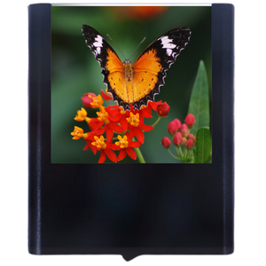 Load image into Gallery viewer, Butterfly-9