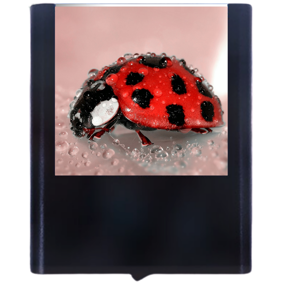 Load image into Gallery viewer, Ladybug-2