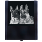 Night Light German Shepherds