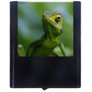 Load image into Gallery viewer, Chameleon-2