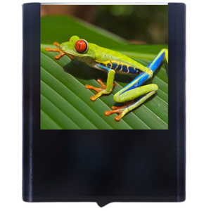 Load image into Gallery viewer, Frog-2