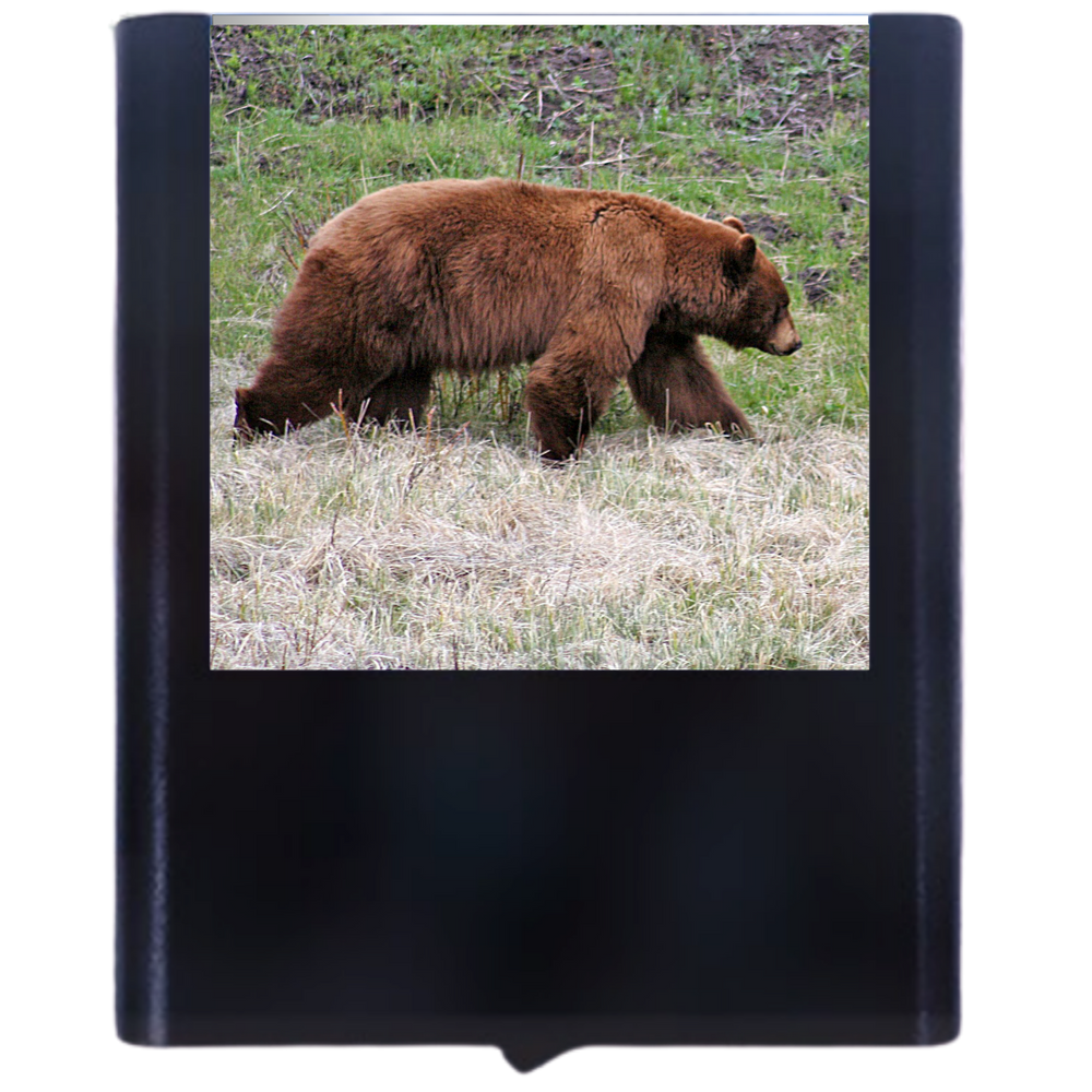 Load image into Gallery viewer, Bear-1