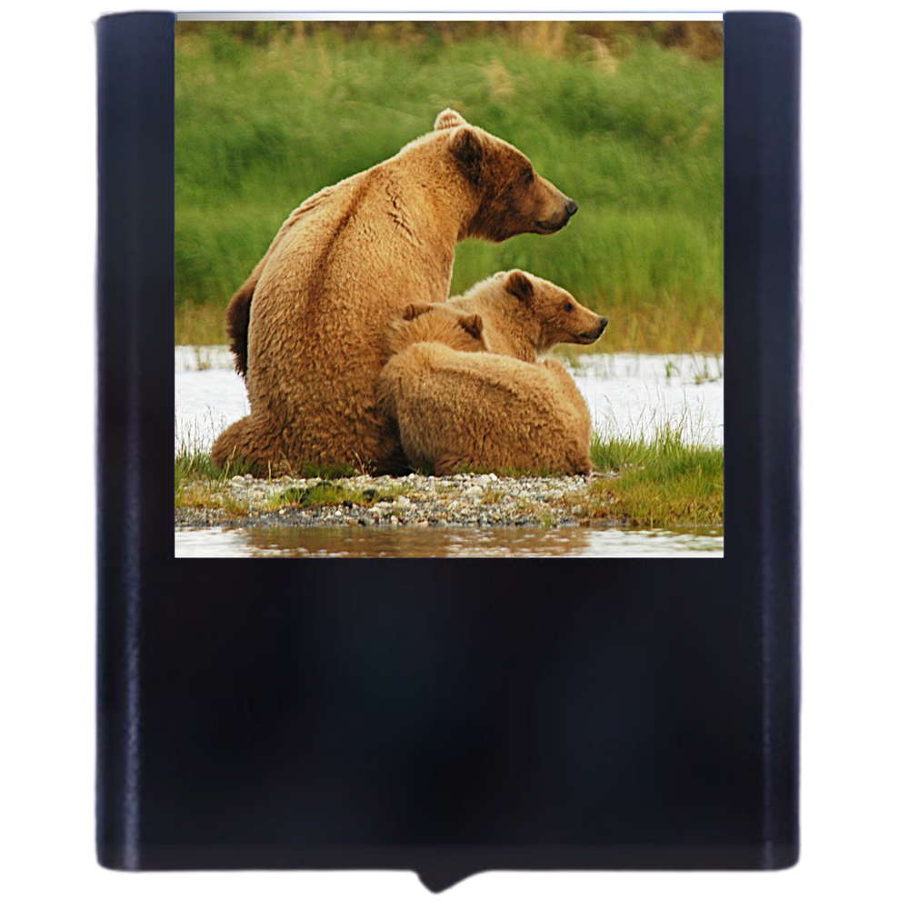 Load image into Gallery viewer, Bear-2