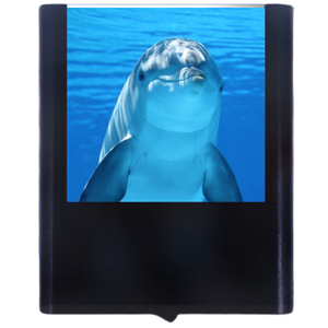 Load image into Gallery viewer, Dolphin-1