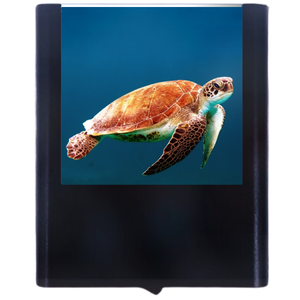 Load image into Gallery viewer, Seaturtle-2