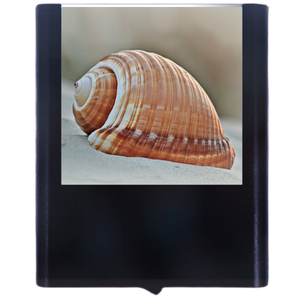 Load image into Gallery viewer, Shell-1