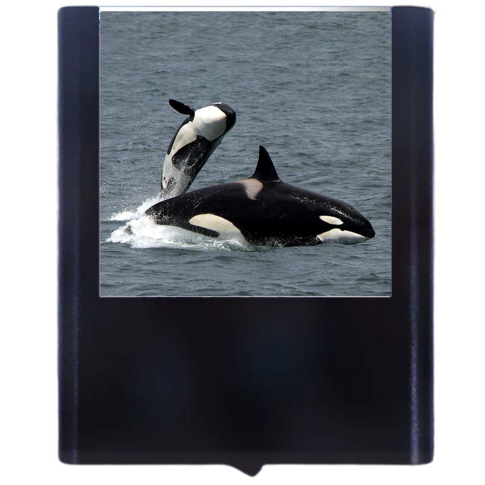 Load image into Gallery viewer, Whale-1