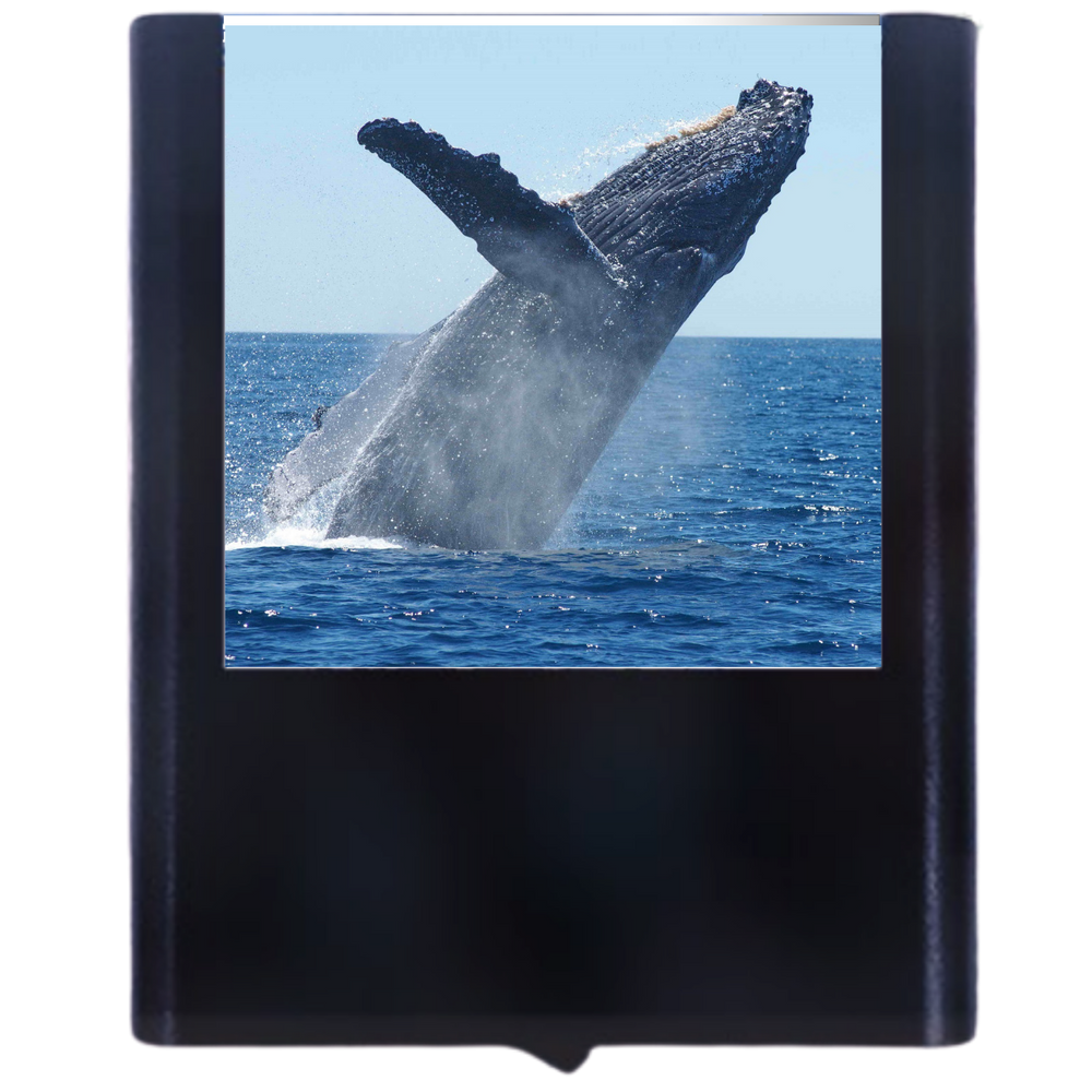Load image into Gallery viewer, Whale-2