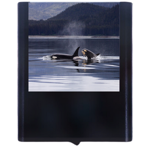 Load image into Gallery viewer, Whale-3
