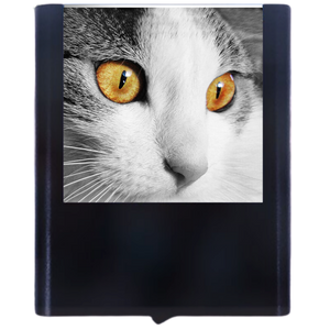 Load image into Gallery viewer, Cat 1