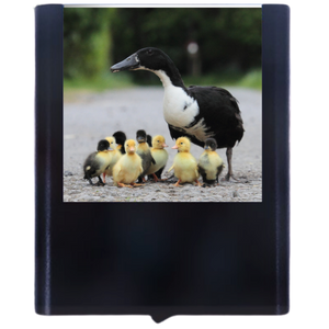Load image into Gallery viewer, Duck-1