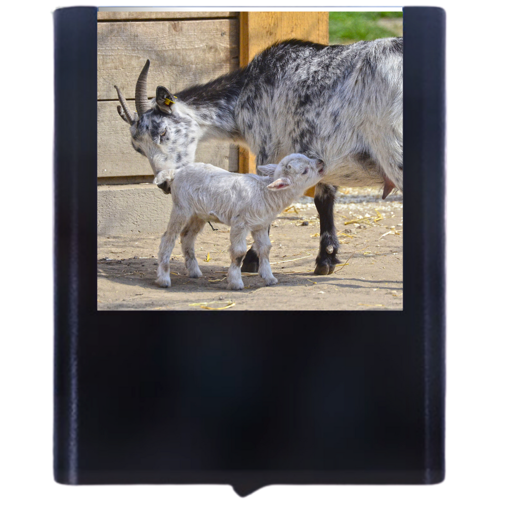 Load image into Gallery viewer, Goat-2