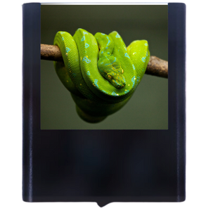 Load image into Gallery viewer, Snake-2