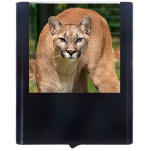 Load image into Gallery viewer, Cougar