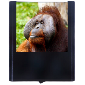 Load image into Gallery viewer, Monkey-1
