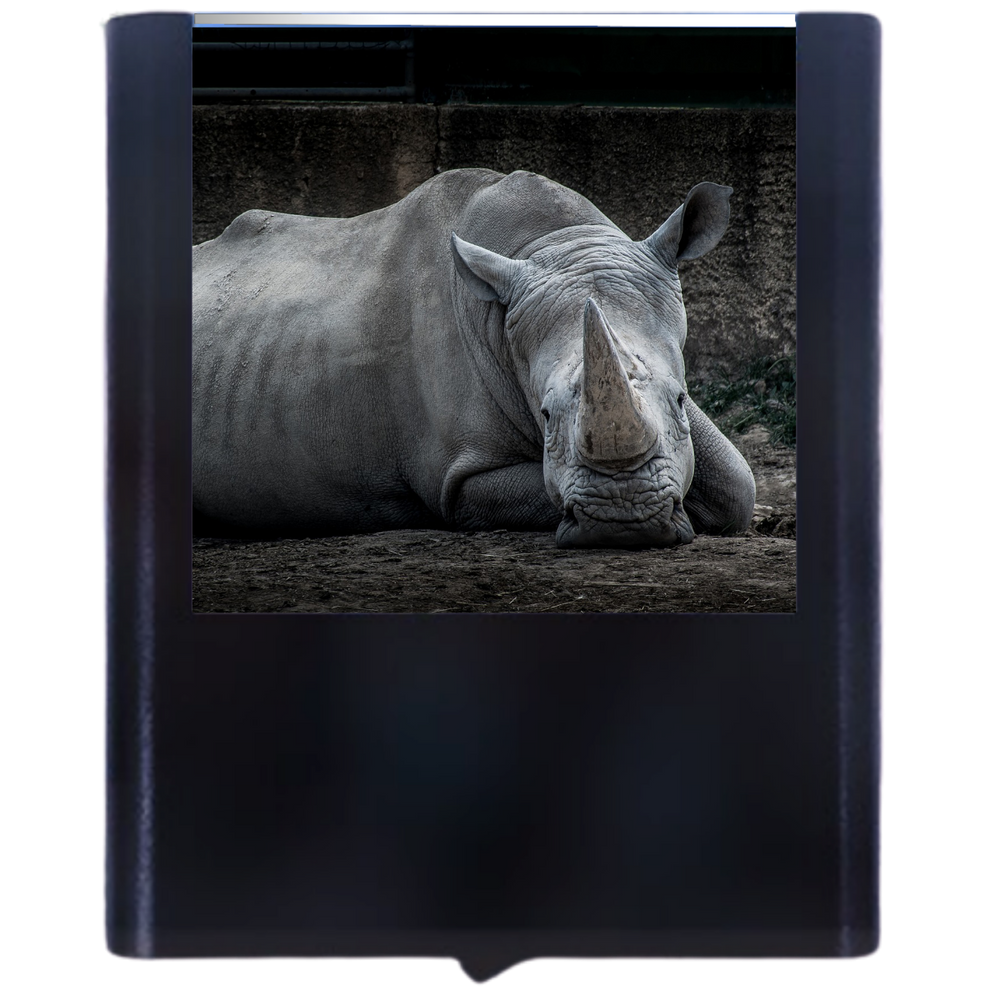 Load image into Gallery viewer, Rhino