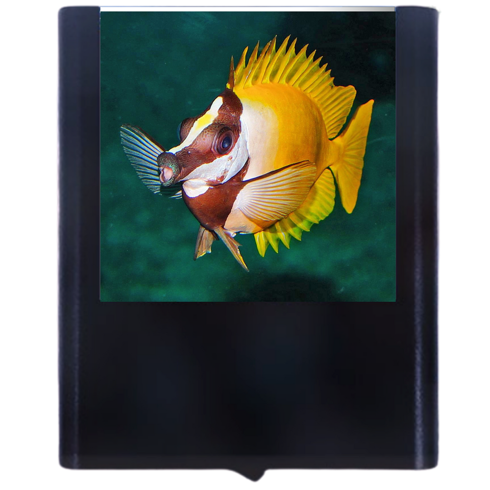 Tropical Fish-2