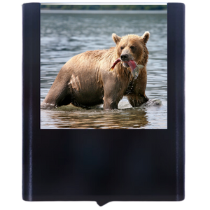 Load image into Gallery viewer, Bear-4
