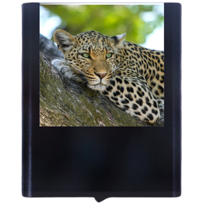 Load image into Gallery viewer, Leopard-1