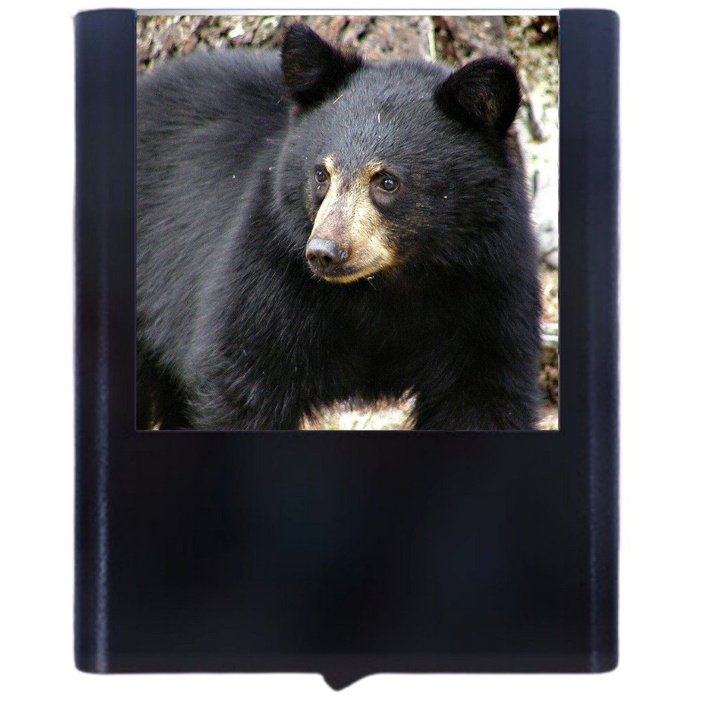 Load image into Gallery viewer, Black Bear 1