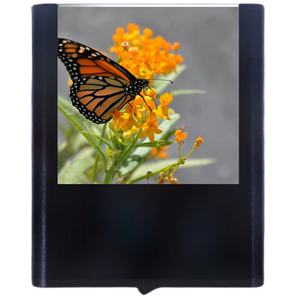 Night Light Monarch Butterfly with Blue Sky B