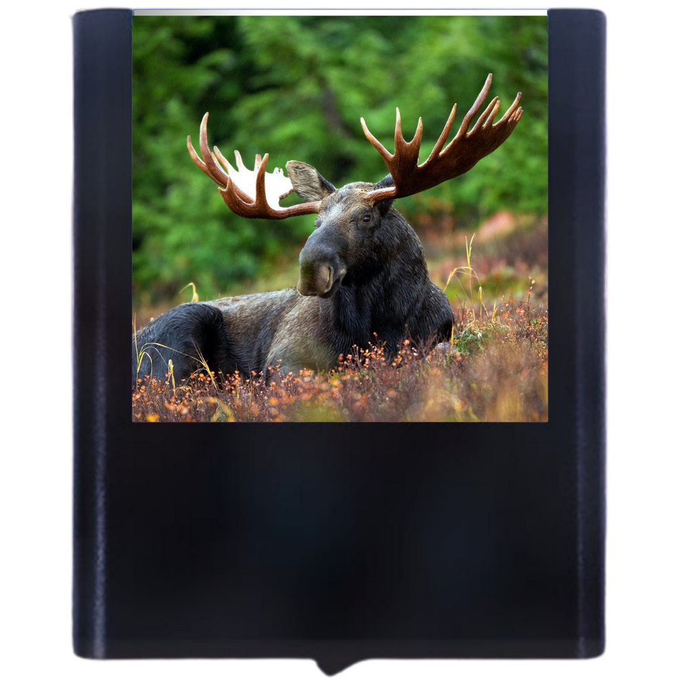 Load image into Gallery viewer, Moose #1