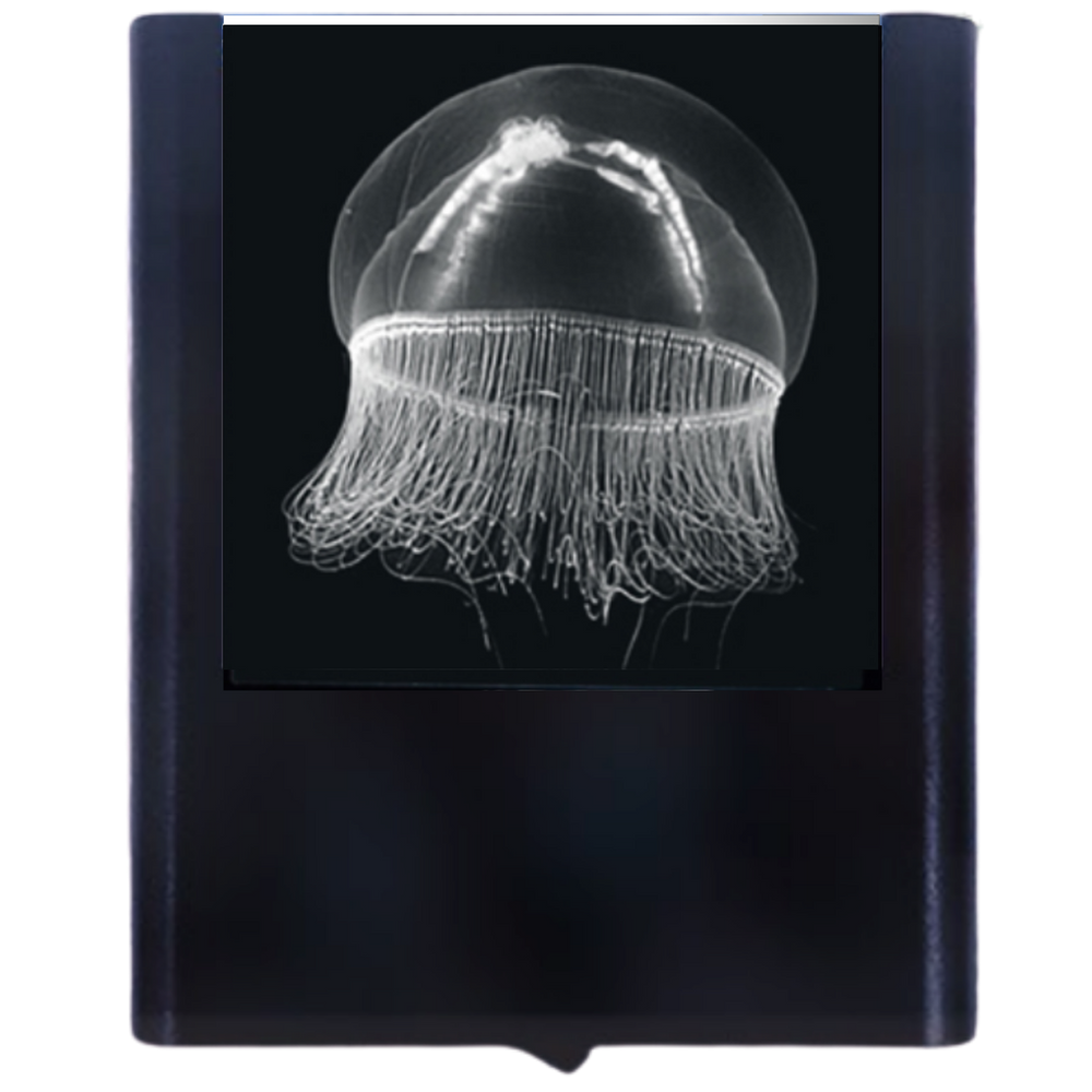 Load image into Gallery viewer, Night Light Jelly Fish 1